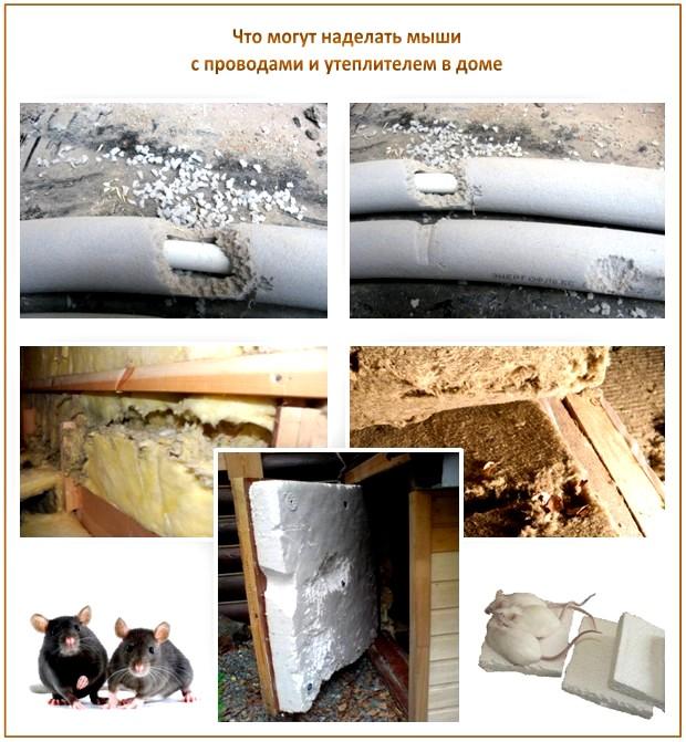 Мыши под полом