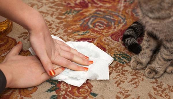 Обработка ковра при загрязнениях от домашних животных