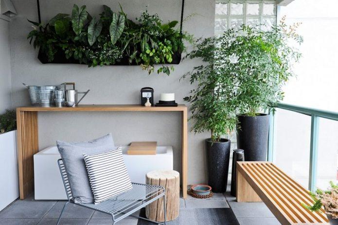 Размещение растений в квартире