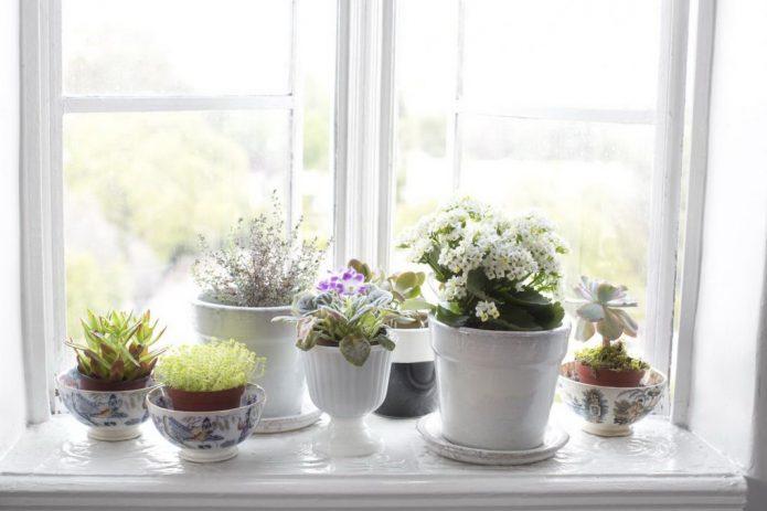 Размещение растений на подоконнике