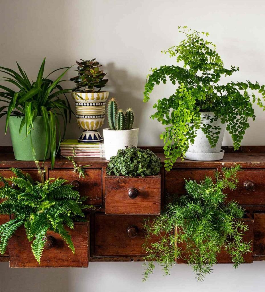 Картинки для оформления комнатные растения