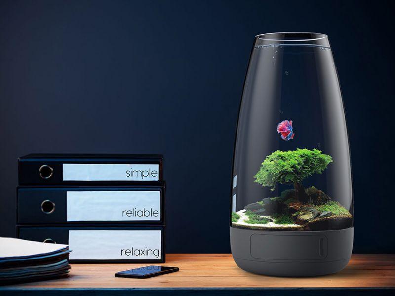 20 лучших идей размещения аквариума в квартире: куда поставить рыбок