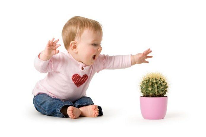 Ребёнок тянется к кактусу