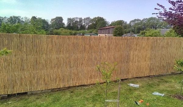 Забор из сетки с камышом