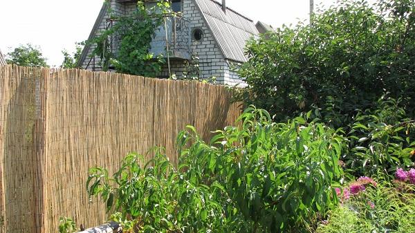 Забор из сетки с бамбуковыми матами