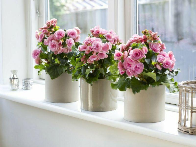 Опасная красота: 9 цветов, которые нельзя держать в квартире