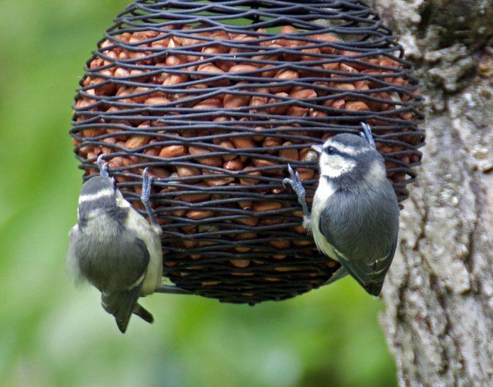 кормушка для птиц своими руками