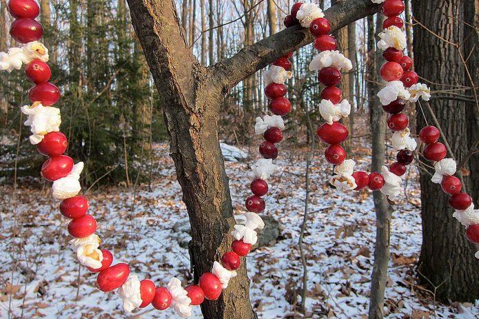 Съедобная кормушка-гирлянда в зимнем саду