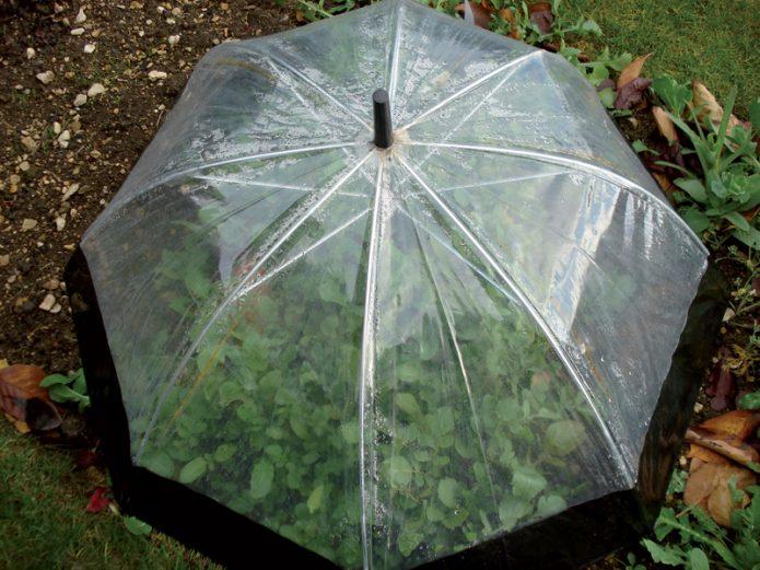 Парник из зонта
