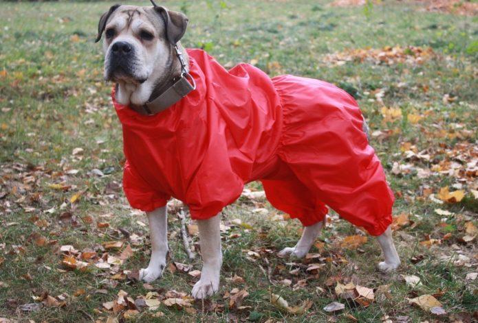 Удобный комбинезон из зонта для собаки