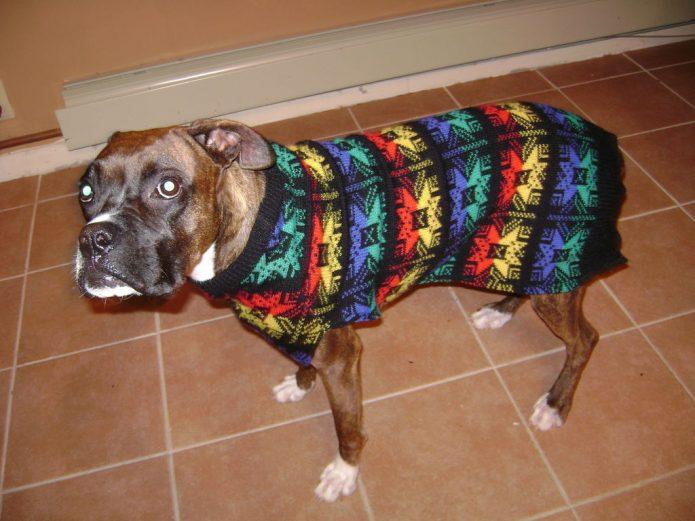 Кофта для собаки из старого свитера