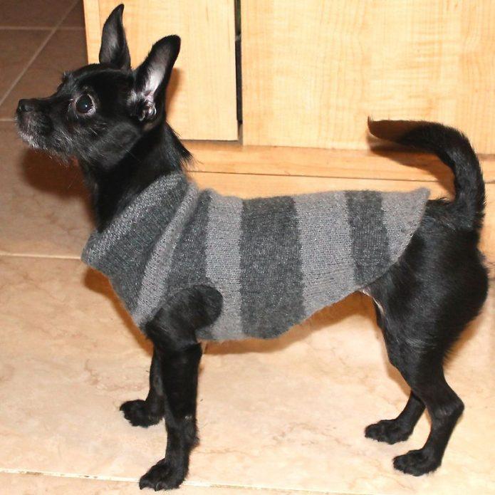 Одежда для собаки из рукова старого свитера