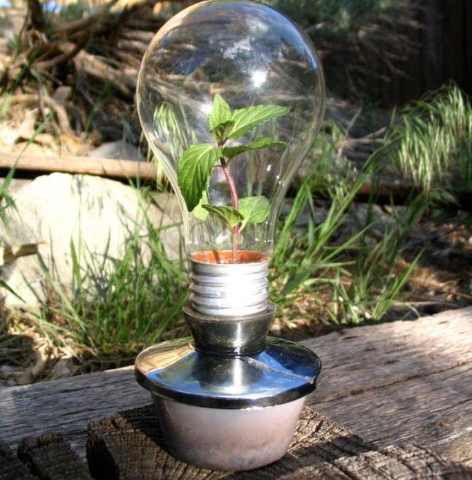 Мини-теплица для рассады из старой лампочки