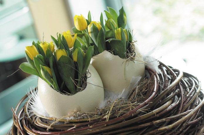 Тюльпаны в яичной скорлупе