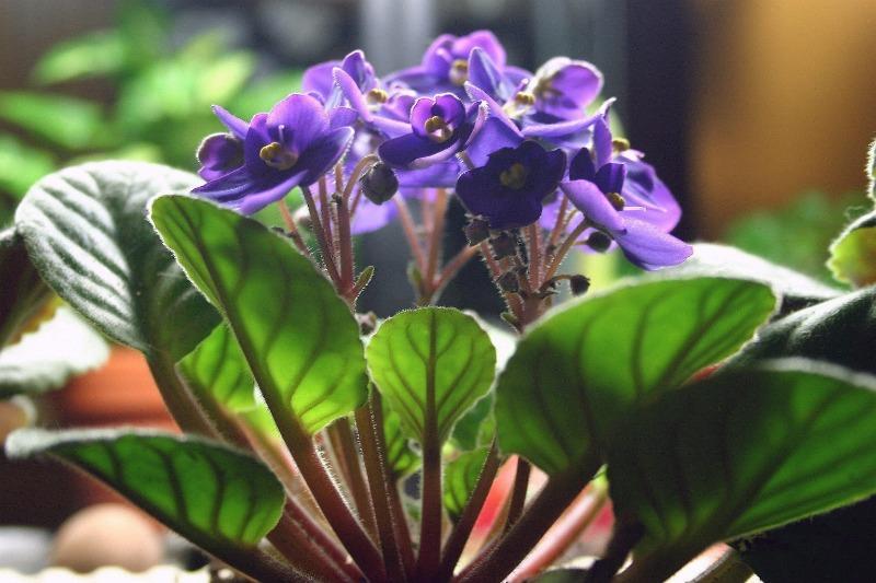 7 домашних растений, которые вызывают аллергию практически у каждого человека