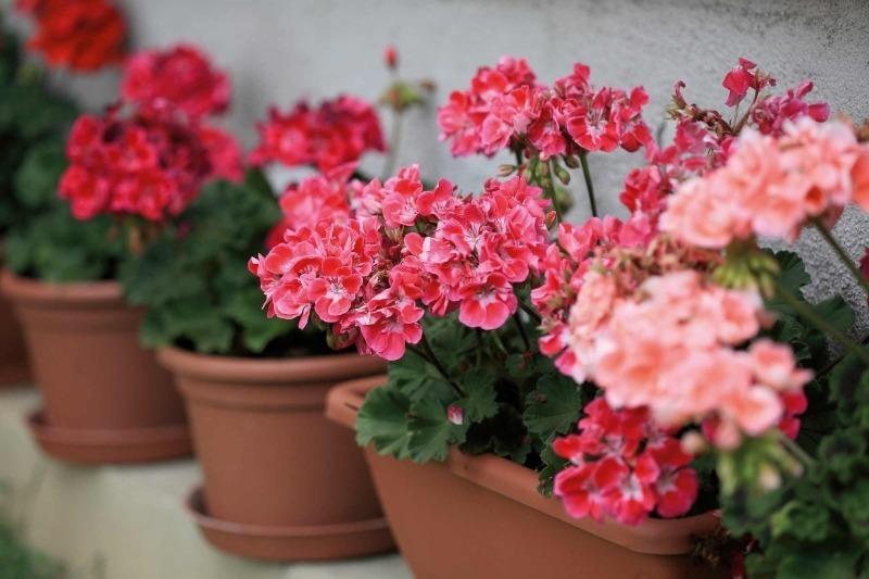 10 очень красивых и неприхотливых комнатных растений, которые сделают ваш дом уютнее