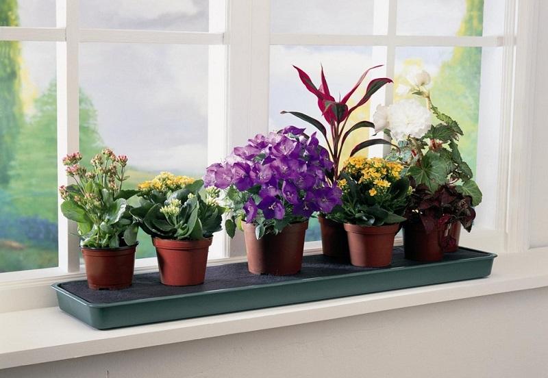 6 причин, почему на самом деле у вас в доме не приживаются растения