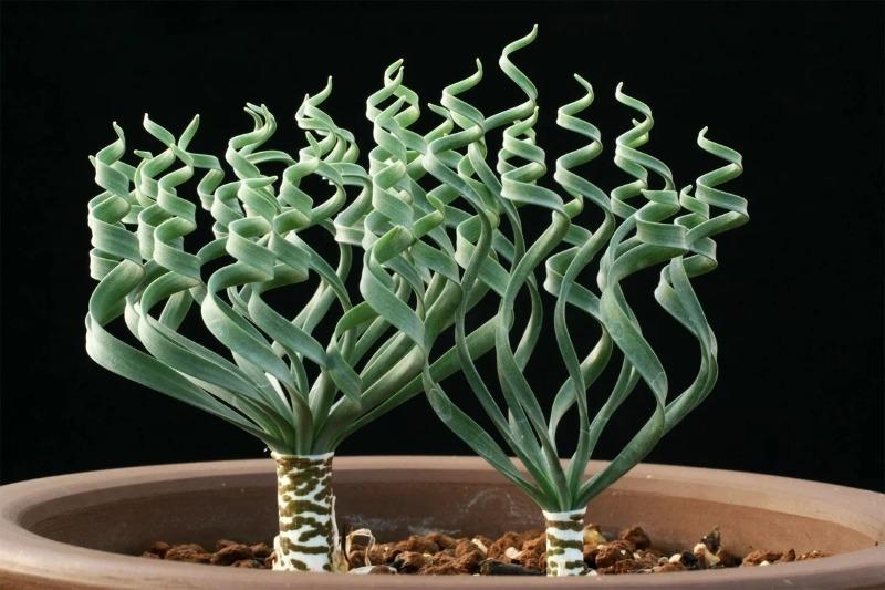 7 домашних растений, которые вы скорее всего еще ни разу не видели