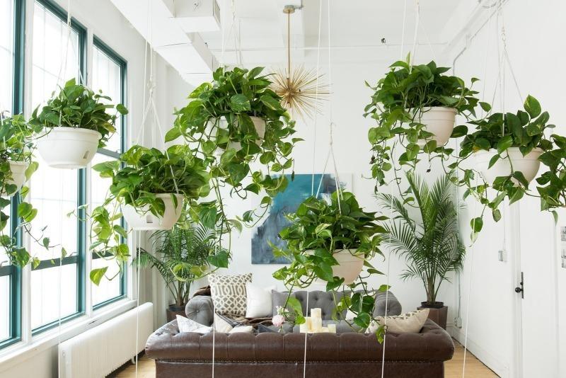 7 классных идей, как обновить интерьер только с помощью растений